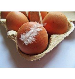 Eieren | 6 stuks (Klein Broekhuizen)