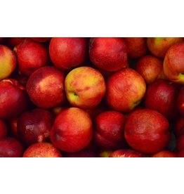 Appels Elstar | 1kg (Klein Broekhuizen)