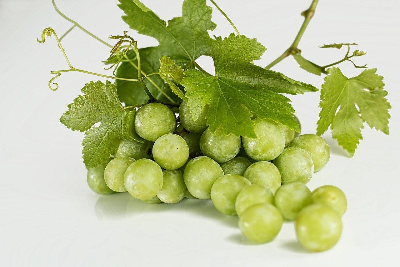 Witte Druiven (Klein Broekhuizen)