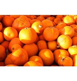 Pompoen Oranje (Klein Broekhuizen)