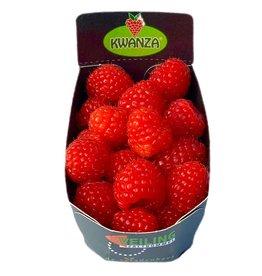 Frambozen | 125gr (Wilting Groente & Fruit)