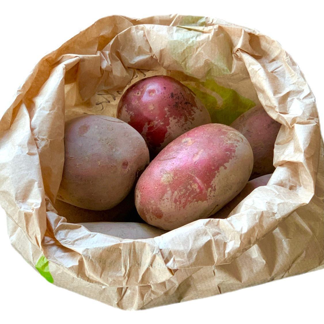 Aardappelen ras Alouette (Klein Broekhuizen)