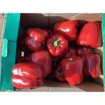 Paprika rood | per stuk (de Stokhorst)