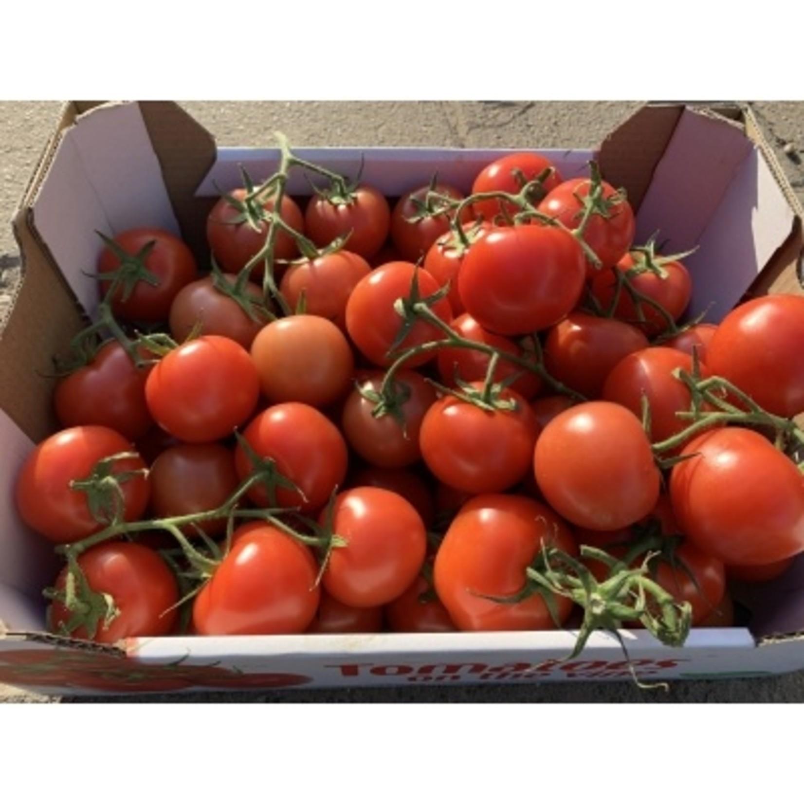 Tomaten   1 kg (de Stokhorst)