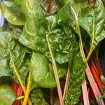 Gekleurde snijbiet | per bos (met gratis recept) (de Groene Schuur)