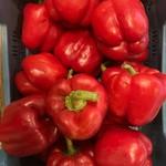 Rode paprika | per stuk (de Groene Schuur)