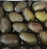 Avocado | per stuk (de Groene Schuur)