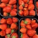 Aardbeien | per bakje (de Stokhorst)