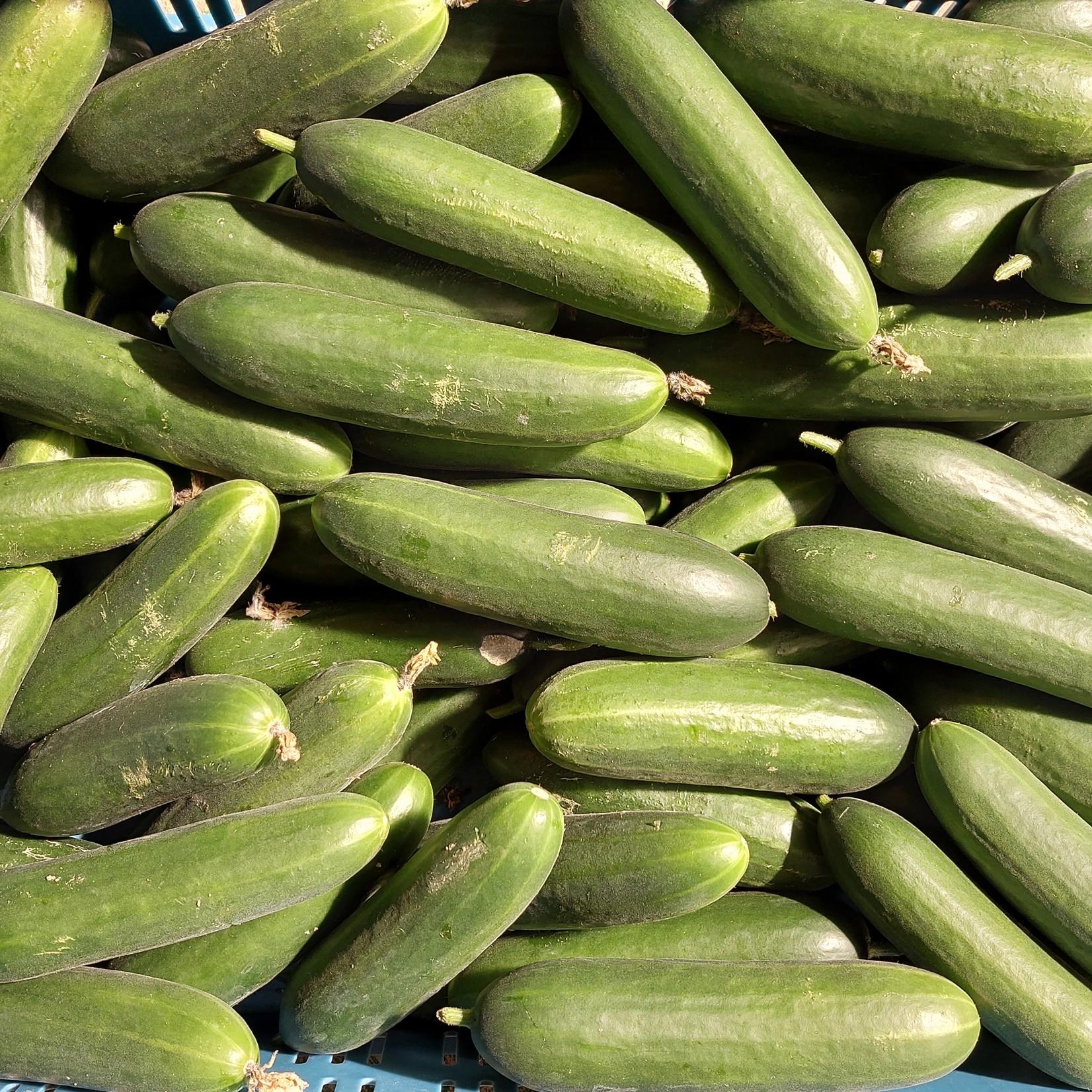 Mini komkommers   5 stuks (de Groene Schuur)