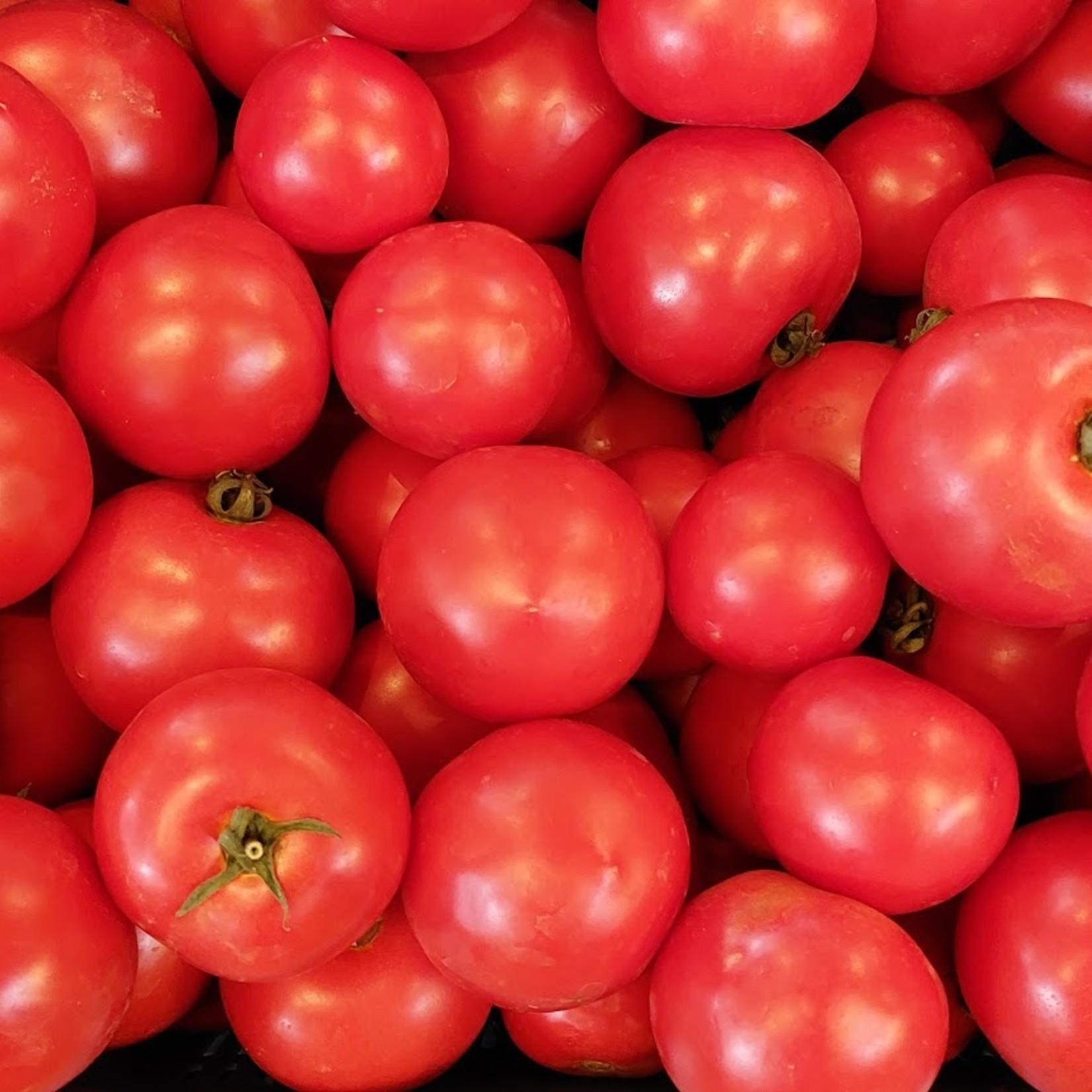 Tomaten   500gr (de Groene Schuur)