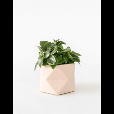 House Raccoon Palua Planter, Theelichthouder Ø 5,5 cm - Millennial Pink