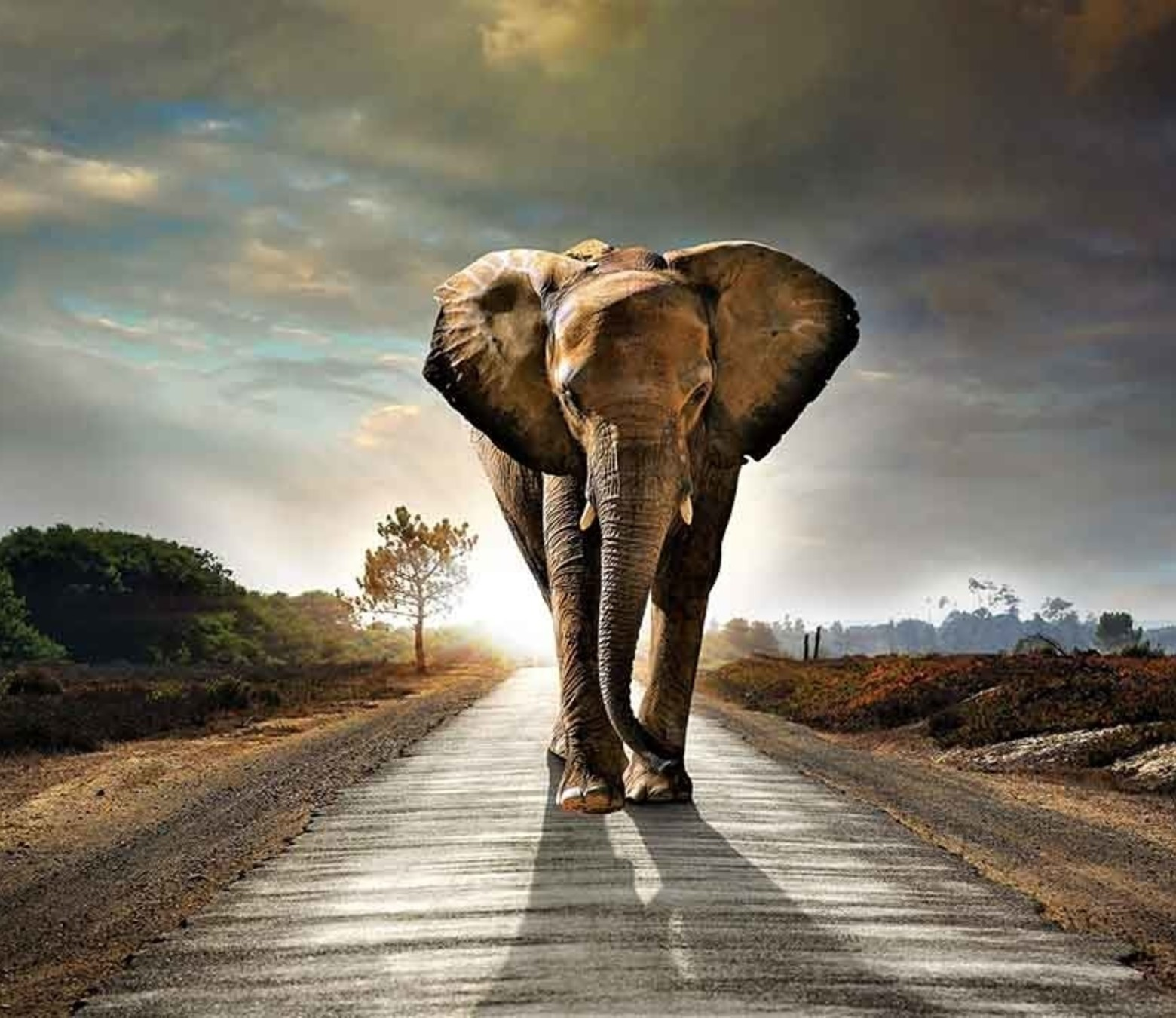 Elephant Road foto-art plexiglas