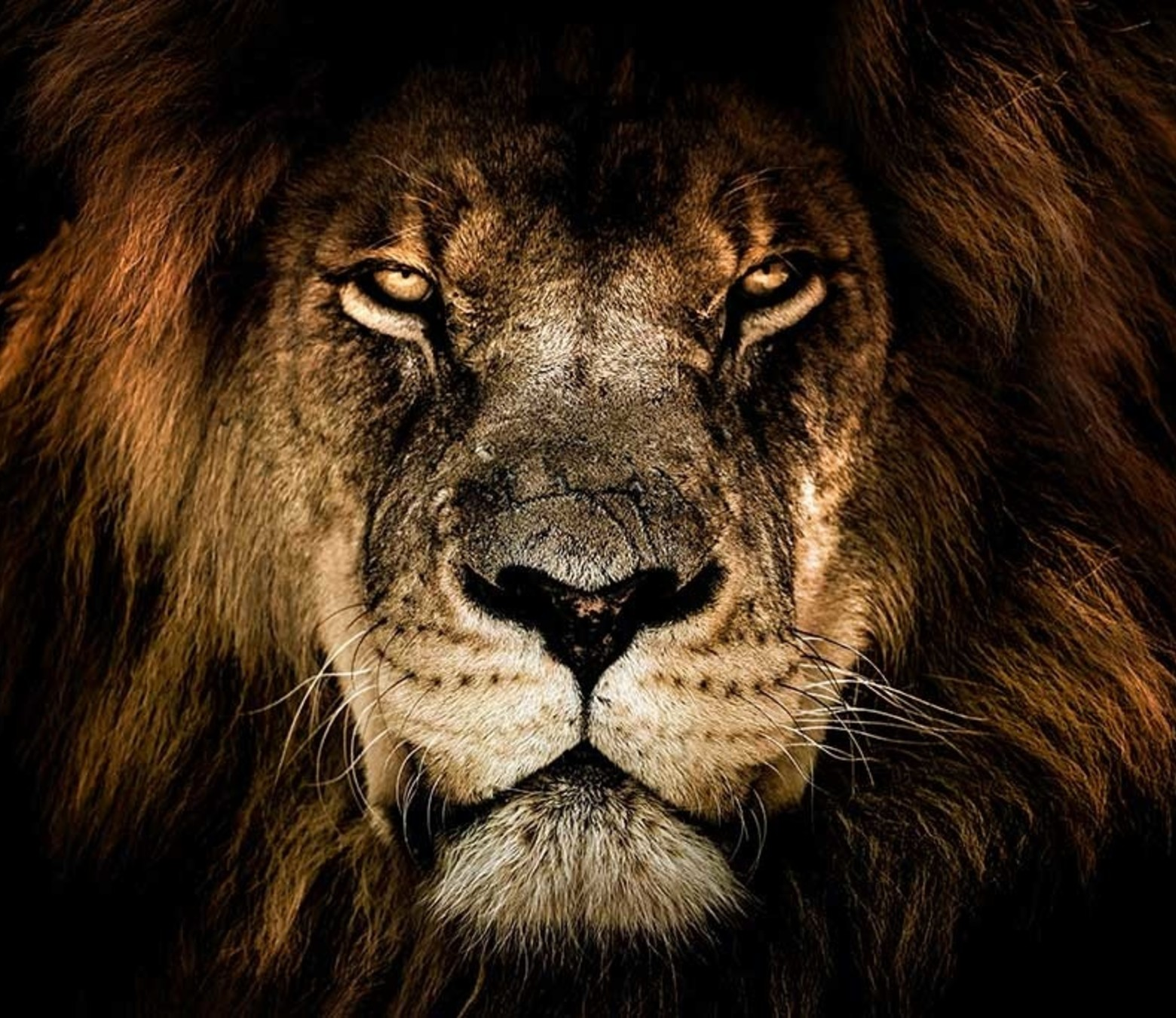 King of the Jungle foto-art plexiglas