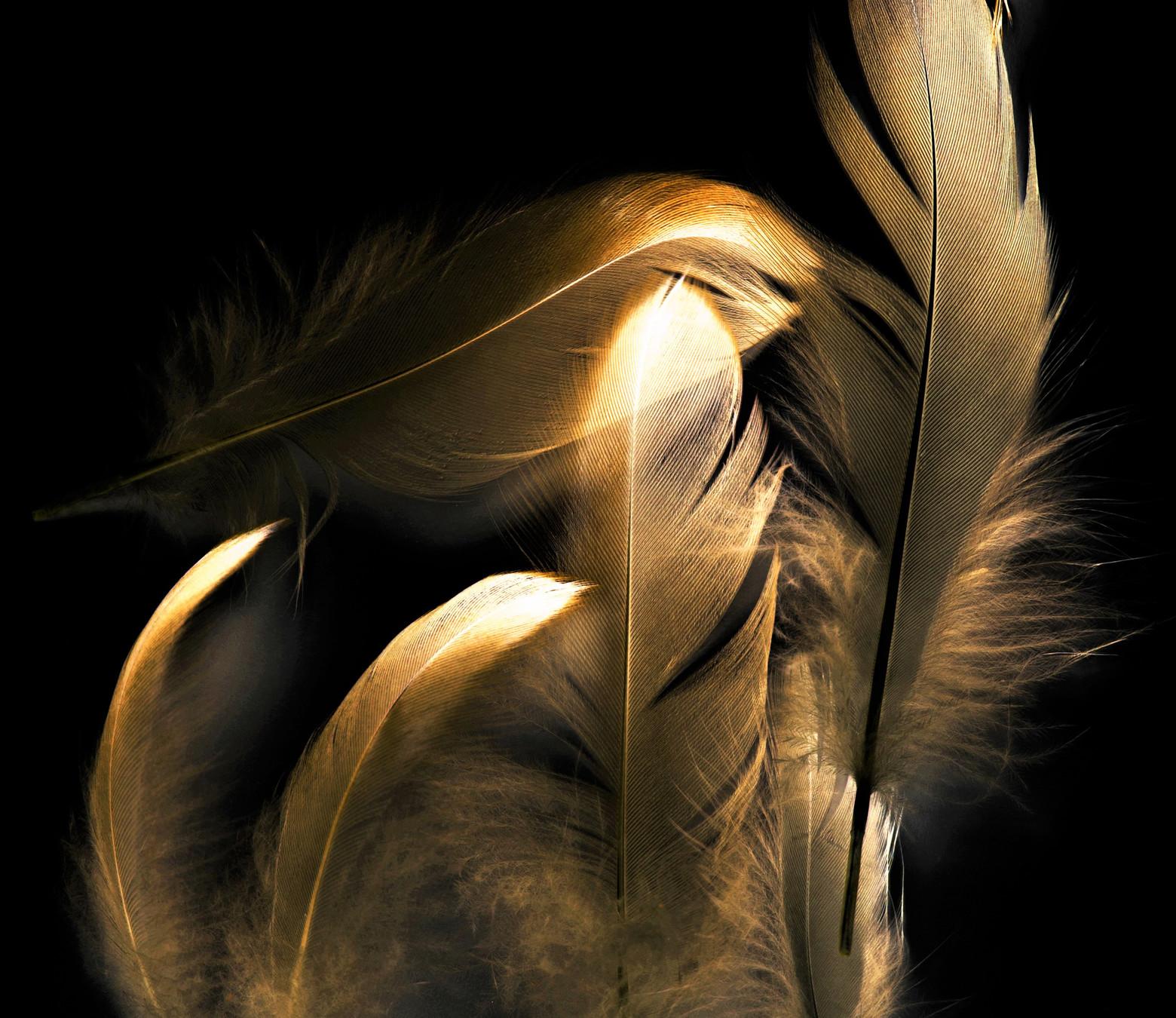 Golden feathers op plexiglas