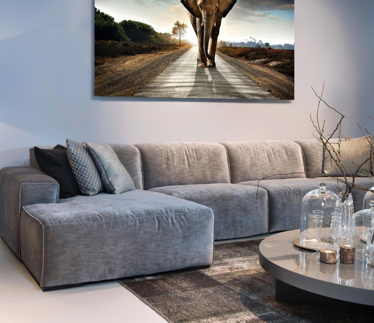 Elephant Road foto-art dibond