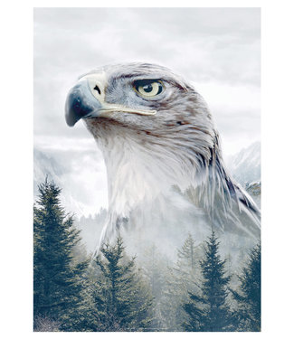 Faunascapes Faunascapes Poster Eagle (different sizes)