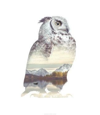 Faunascapes Faunascapes Poster Owl (different sizes)