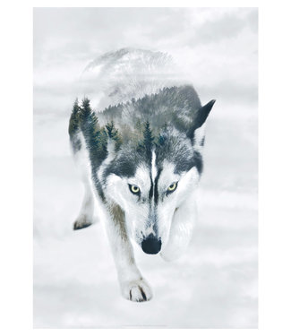 Faunascapes Faunascapes Poster Siberian Husky  (different sizes)