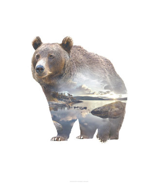 Faunascapes Faunascapes Poster Bear 50 x 70cm