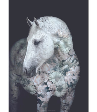 Faunascapes Faunascapes Poster Andalusion horse (diverse maten) Flower portrait