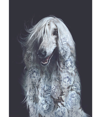 Faunascapes Faunascapes Poster Afghan dog (various sizes) Flower portrait