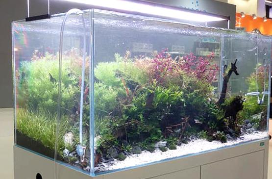 Ila Optic-White glass aquarium
