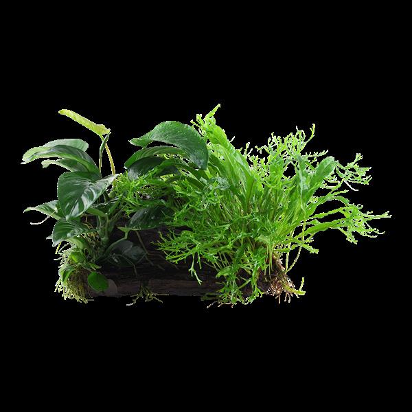 Plant op decoratie