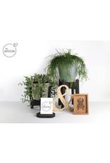 By WOOM |  Plantenhouder klein