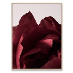 Paper Collective poster Peonia 03 50x70