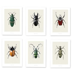 Hagedornhagen Bugs Box BB4 beetles