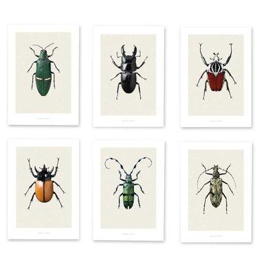 Hagedornhagen Bugs Box BB4 beetles