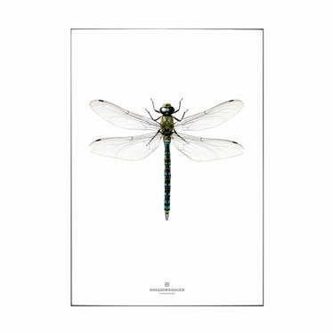 Hagedornhagen Postcard with dragonfly L1 NEW