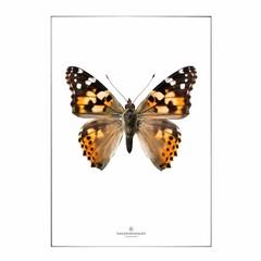 Hagedornhagen postcard S18 butterfly