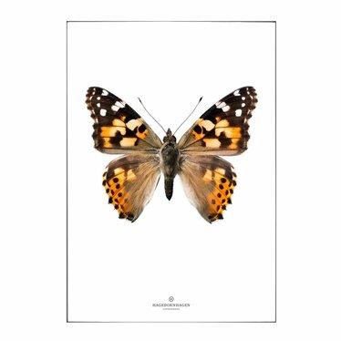Hagedornhagen Postcard with envelope with butterfly S18