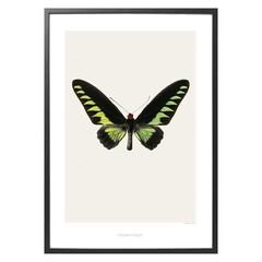 Hagedornhagen poster S5 met vlinder 42 x 59 cm