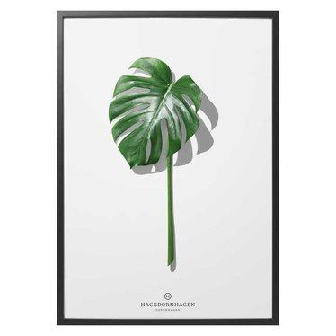 Hagedornhagen Poster Folium F5 Monstera - 50x70