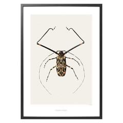 Hagedornhagen poster B6 tor Harlequin Beetle