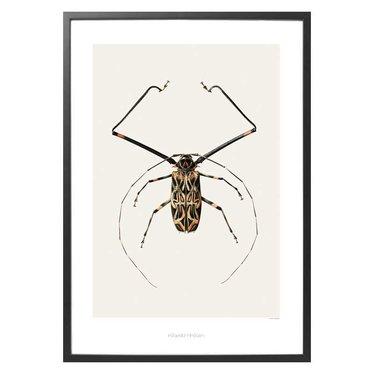 Hagedornhagen Poster B6 Acrocinus longimanus (Harlequin Beetle) - 42x59 cm