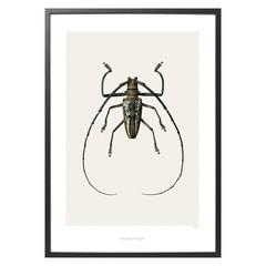Hagedornhagen poster B2 met insect 42x59 cm