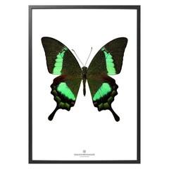 Hagedornhagen Poster S17 groene vlinder