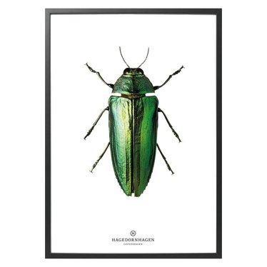 Hagedornhagen Poster - card with green beetle B9