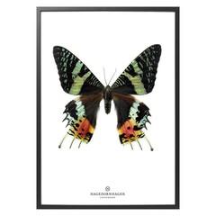 Hagedornhagen vlinder S14