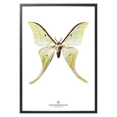 Hagedornhagen poster vlinder S15