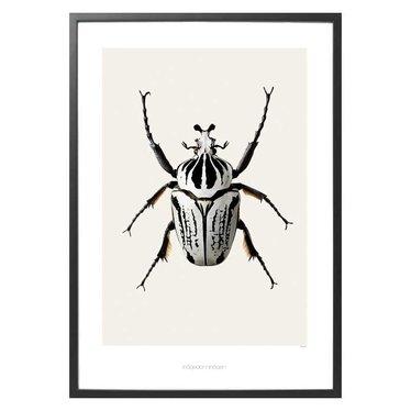 Hagedornhagen Poster B8 Goliathus orientalis - Goliathkever (42x59)