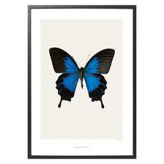 Hagedornhagen poster S1 vlinder 42x59