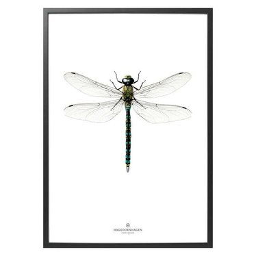 Hagedornhagen Poster with dragonfly L1