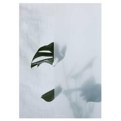 Kristina Dam Botanic poster Split Leaf I 50x70