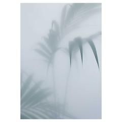 Kristina Dam Botanic poster Palm I 70x100