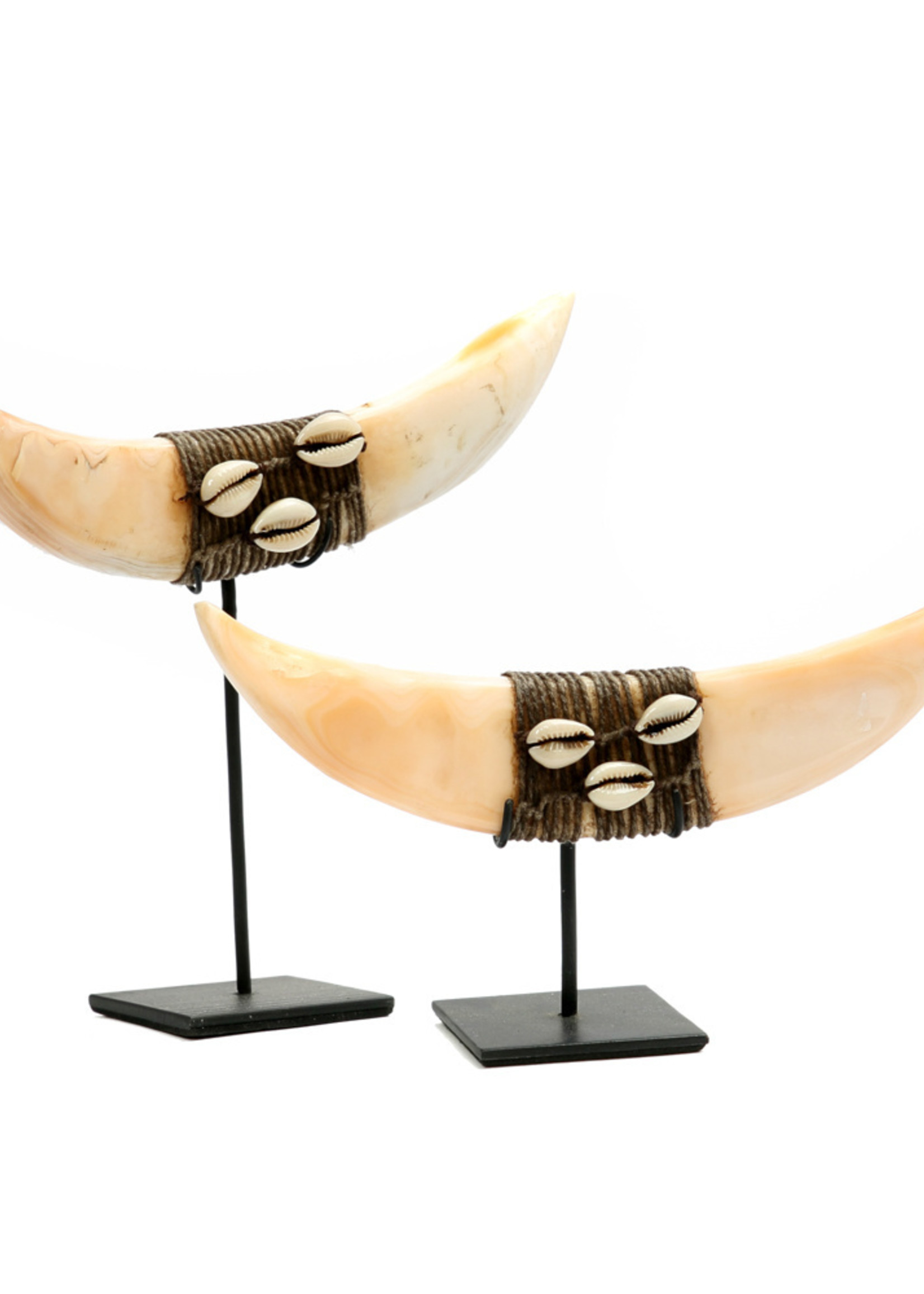 The Horn Shell On Stand