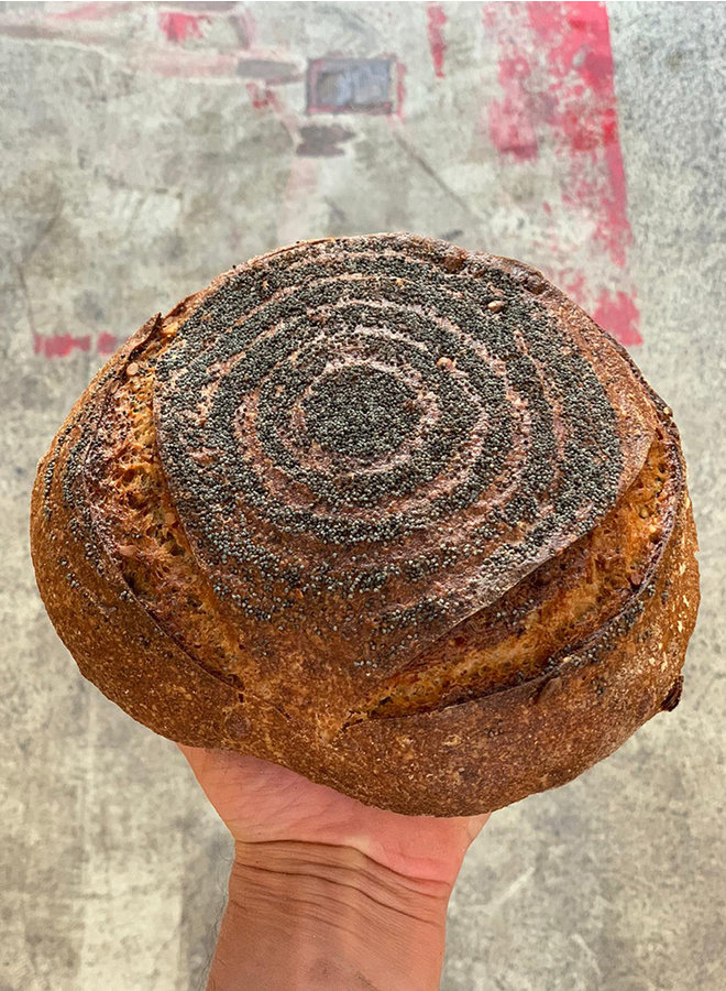 Broei brood gris maanzaad - alleen afhalen